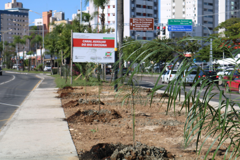 Avenida Centenário: Famcri revitaliza vegetação próxima ao Canal Auxiliar