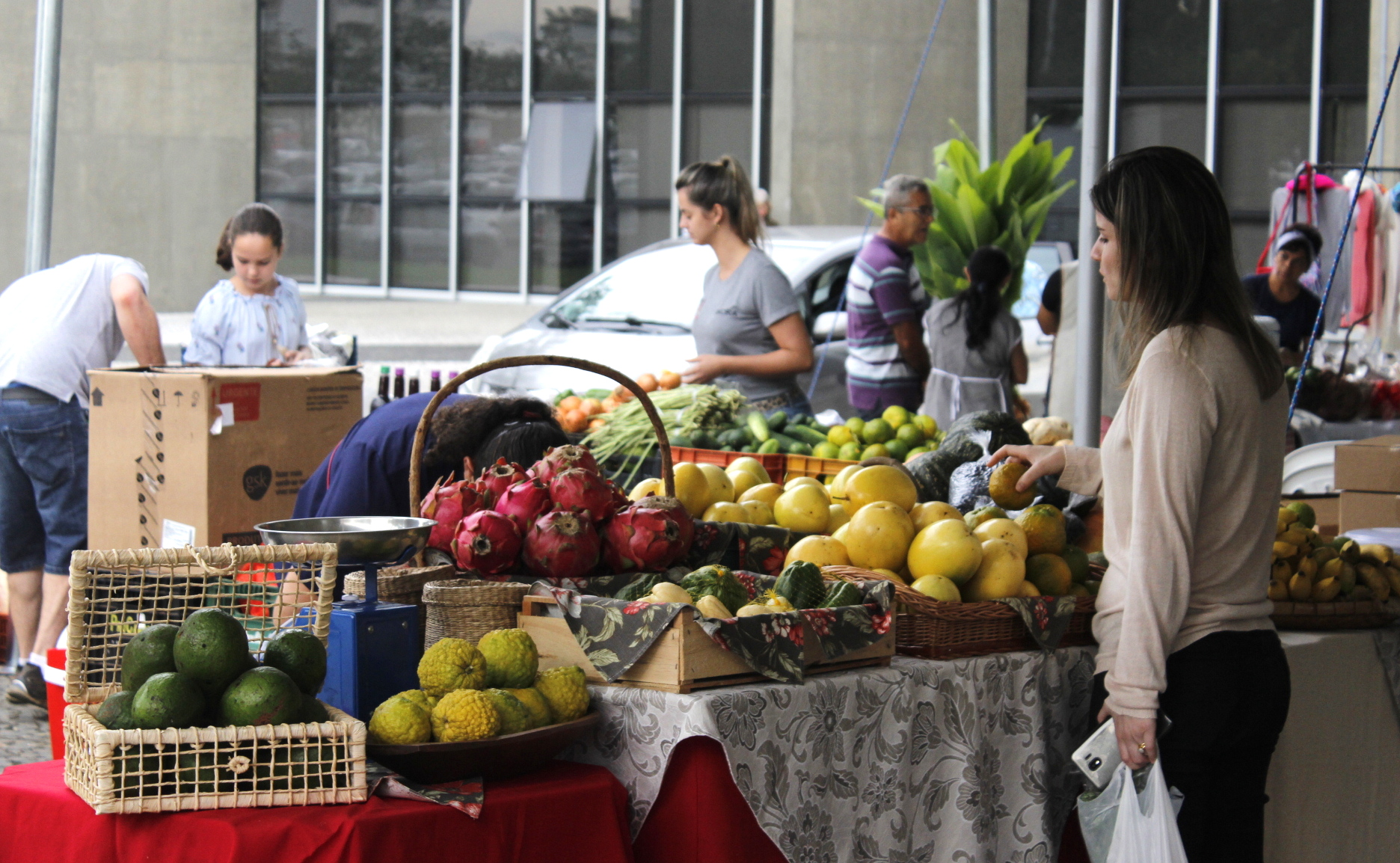 Feira da Agricultura Familiar atrai moradores e beneficia agricultores no Paço Municipal Marcos Rovaris