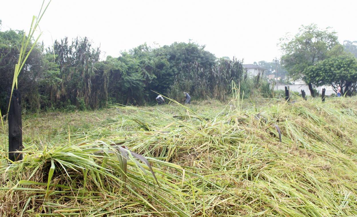 Mutirão da Prefeitura de Criciúma limpa 11 terrenos nesta sexta e sábado